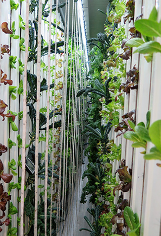 Vegetables grow in vertical towers inside a shipping container farm.