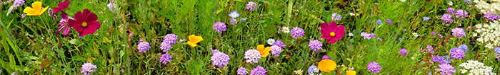 A mix of wildflowers to attract bees - Neonicotinoid Pesticides in Honey.