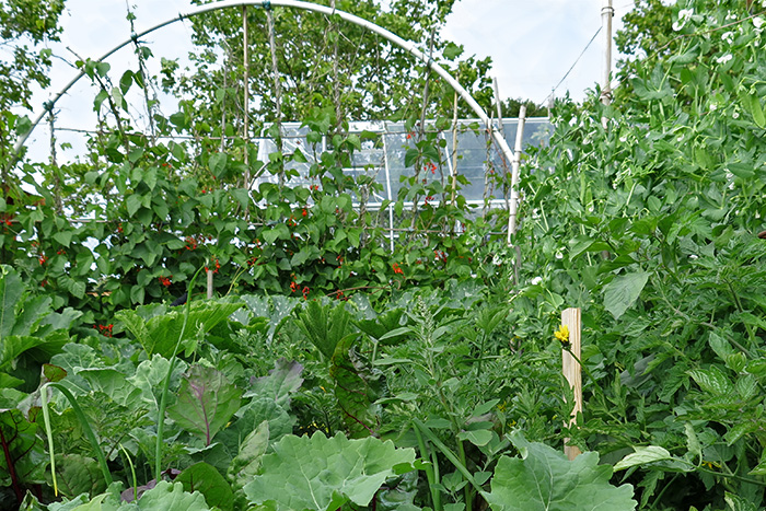 A vegetable garden surrounded by wind-protecting trellises that create a warm microclimate for plants.