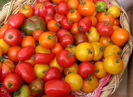 A basket of ripe tomatoes